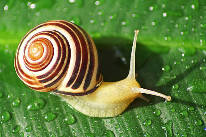 Pop music evolves at a snail's pace, scientists say.