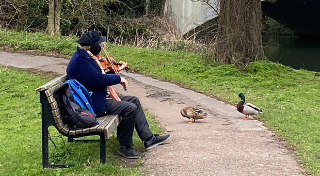 A man played the violin to ducks in Cambridge on Valentine's Day