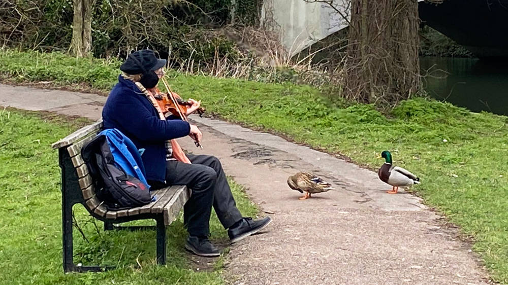 Man playing violin to ducks is the most pure and beautiful thing