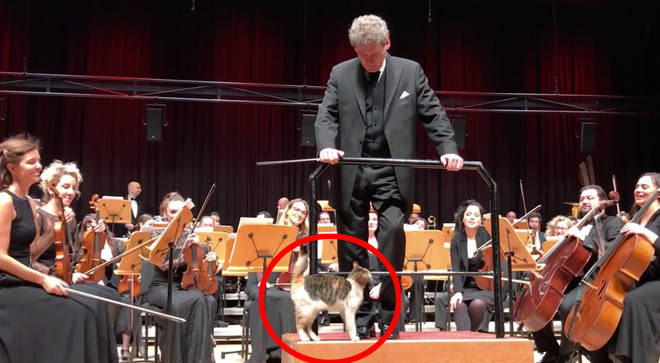 Cat disrupts a live orchestral performance in Istanbul