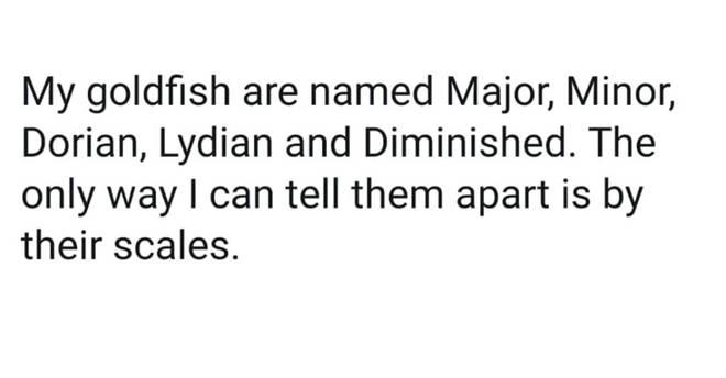 Goldfish meme