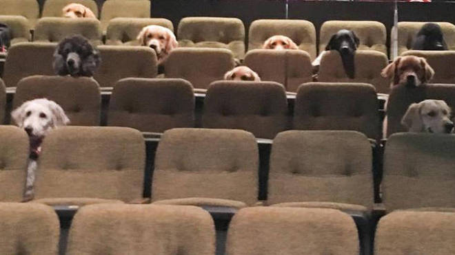 Dogs attend a musical