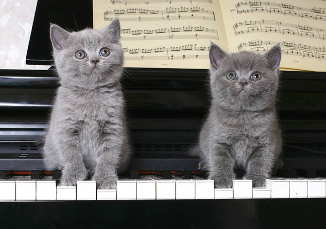 'Cat music' is the best music to relax your furry friend