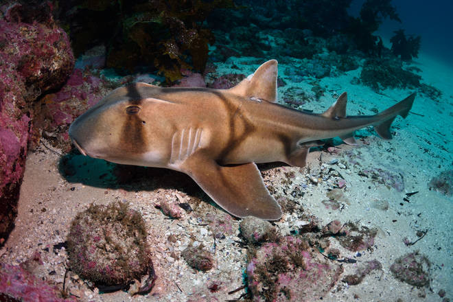 Port Jackson sharks can recognise jazz music when food is involved