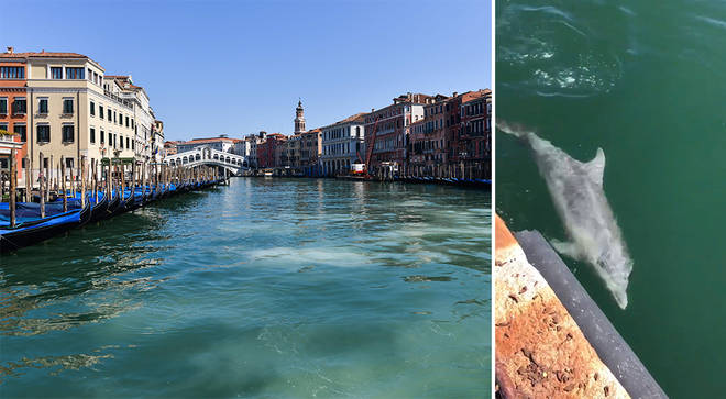 Venice canals run clear, dolphins appear in Italy's waterways amid coronavirus lockdown