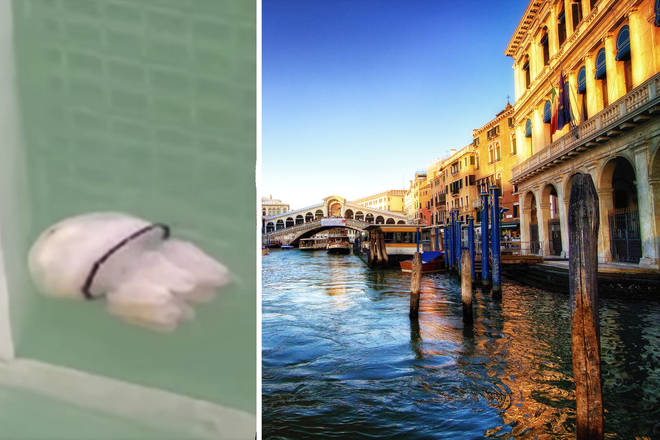 Serene jellyfish spotted swimming in Venice's clearer waters