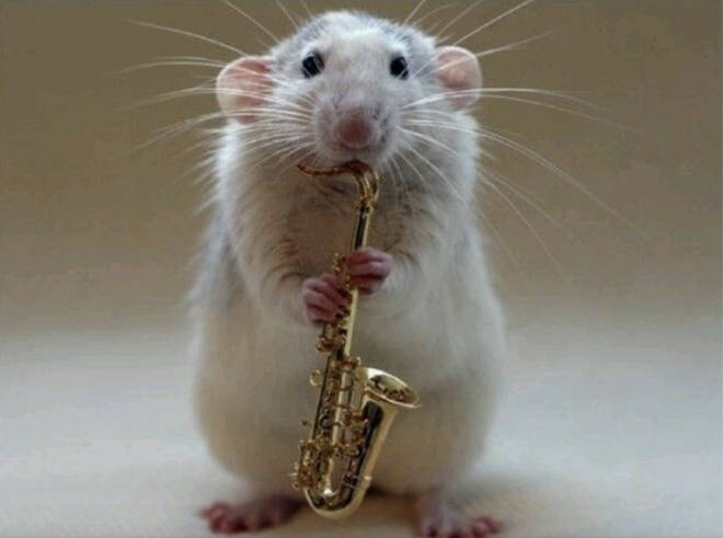 Rats prefer jazz to classical music