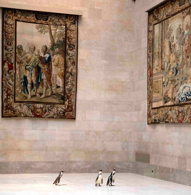 A museum admitted a waddle of penguins, and they enjoyed the art immensely