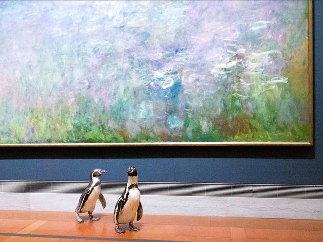 The penguins were welcomed to the gallery while its doors remained closed to the public due to coronavirus.