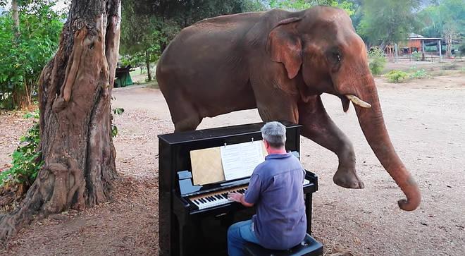 Chaichana the elephant dances to a Beethoven piano sonata