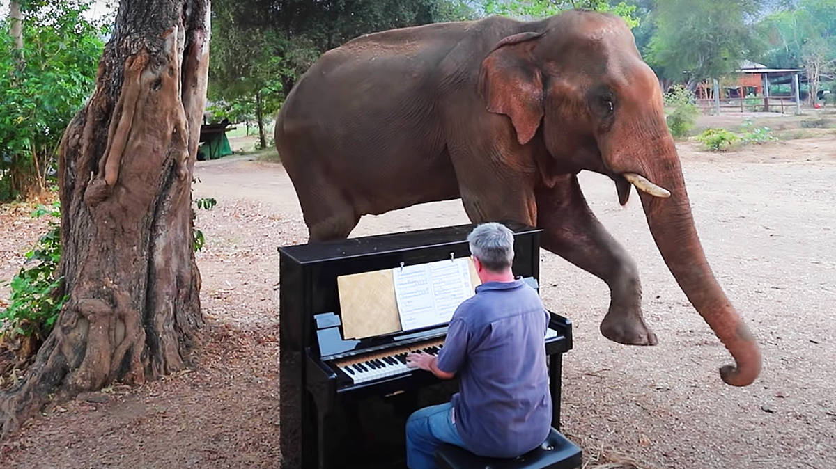 This friendly elephant enjoying a Beethoven piano sonata is the most beautiful scene