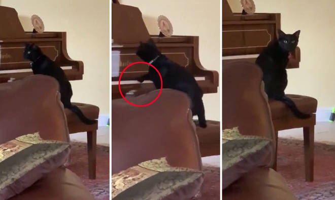 Cat tries to play the piano but keeps forgetting it doesn't like the sound