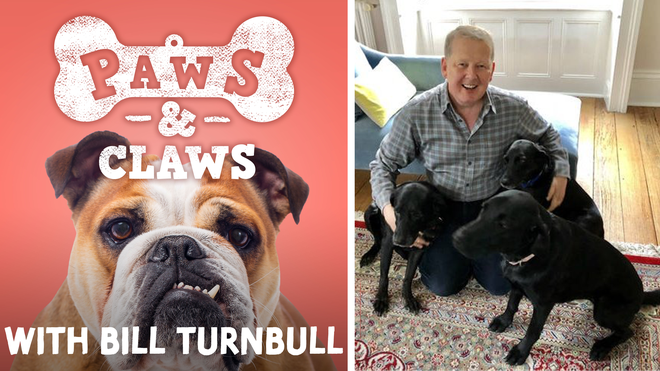 Introducing Bill Turnbull's new Classic FM podcast, Claws & Paws