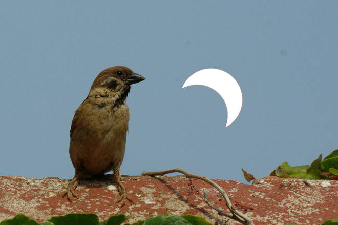 In China, a bird sits in front of the solar eclipse which coincided with this year's summer solstice