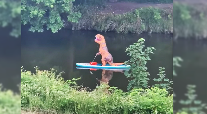 Watch as these T-Rexes paddle down a river in Bristol
