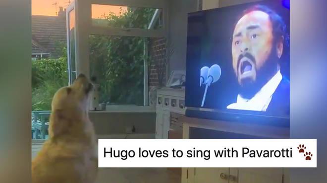 Dog duets with Pavarotti