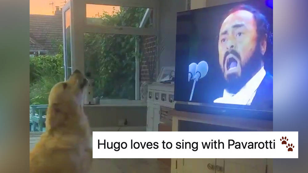Operatic dog duets perfectly with Luciano Pavarotti on 'Nessun dorma'