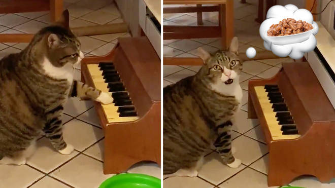 Cat plays piano when he's hungry