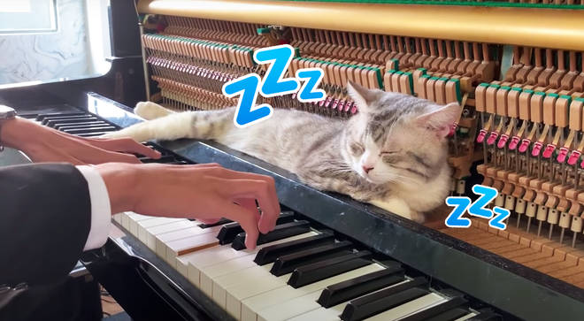 Cat Sleeps in Piano for a Massage