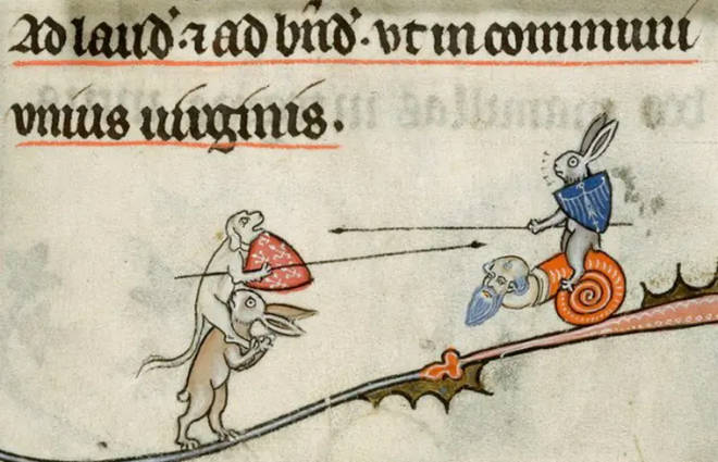 Hares spear fighting