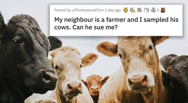 Reddit cow problem