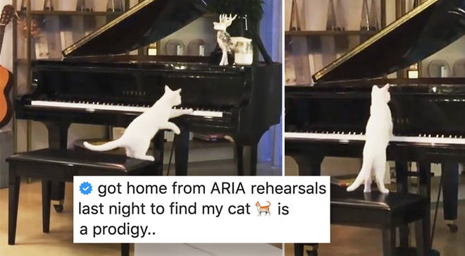 Delta Goodrem's cat plays her grand piano