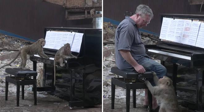 Paul Barton plays piano for monkeys