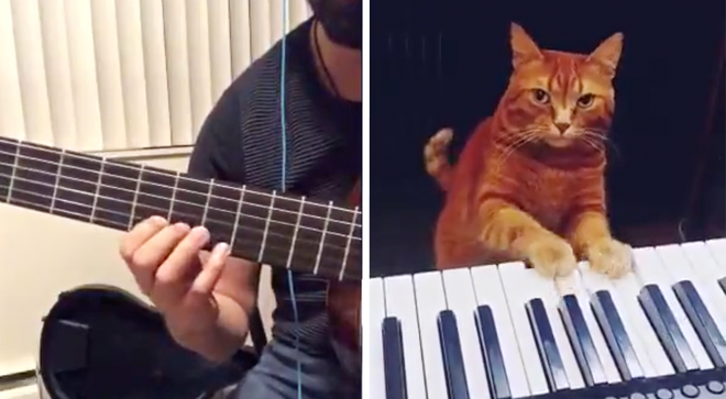 Guitarist duets with his piano-playing cat