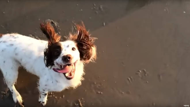 Tilda Swinton's spaniel makes its film debut