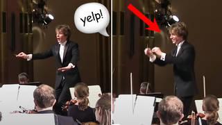 Someone woke up with a shriek during Stravinsky's The Firebird