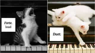 Cats teach musical terms