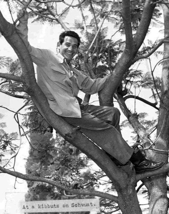 Leonard Bernstein, up a tree in Israel.