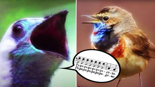 Spectacular bird chorus sings Mozart opera duet in colourful short film