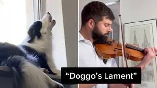 TikTok violinist duets with howling dog to create melancholic 'doggo's lament'