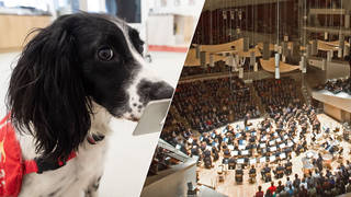 In Germany, super-sniffer dogs are detecting whether concertgoers have coronavirus