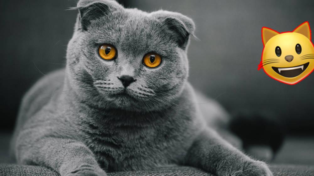 What Cat Breed Should I Get Quiz
