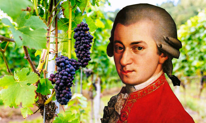 Il Paradiso di Frassina vineyard uses Mozart's music to encourage their grapes to grow