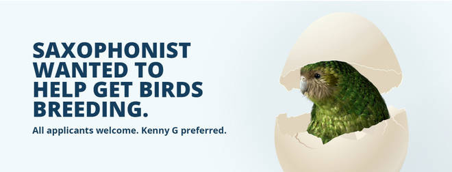 The advert calls for a saxophonist to encourage the birds to mate