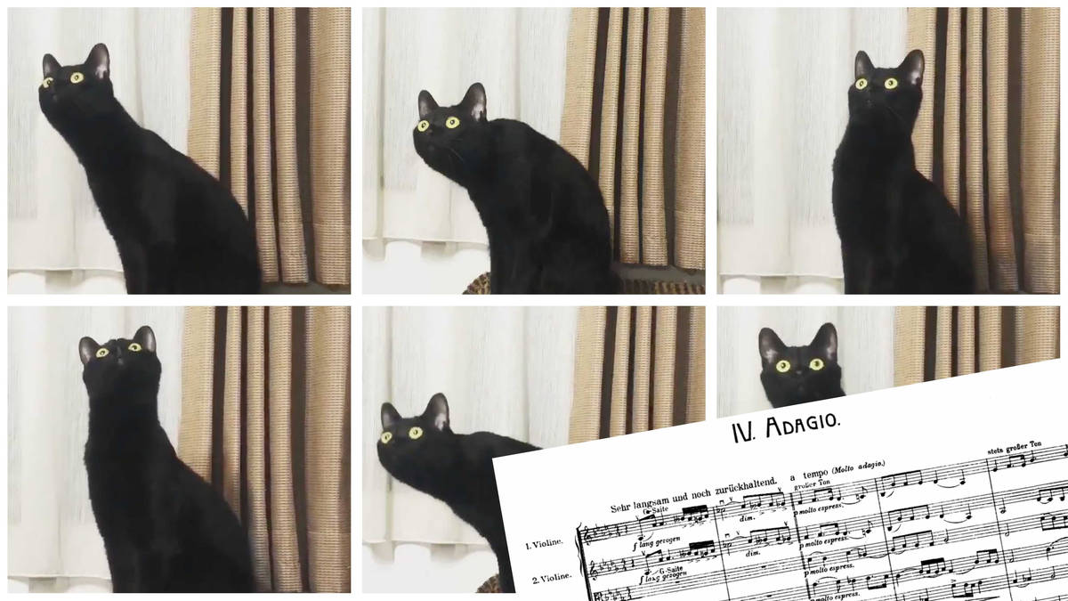 This cat listening to Mahler is basically all of us
