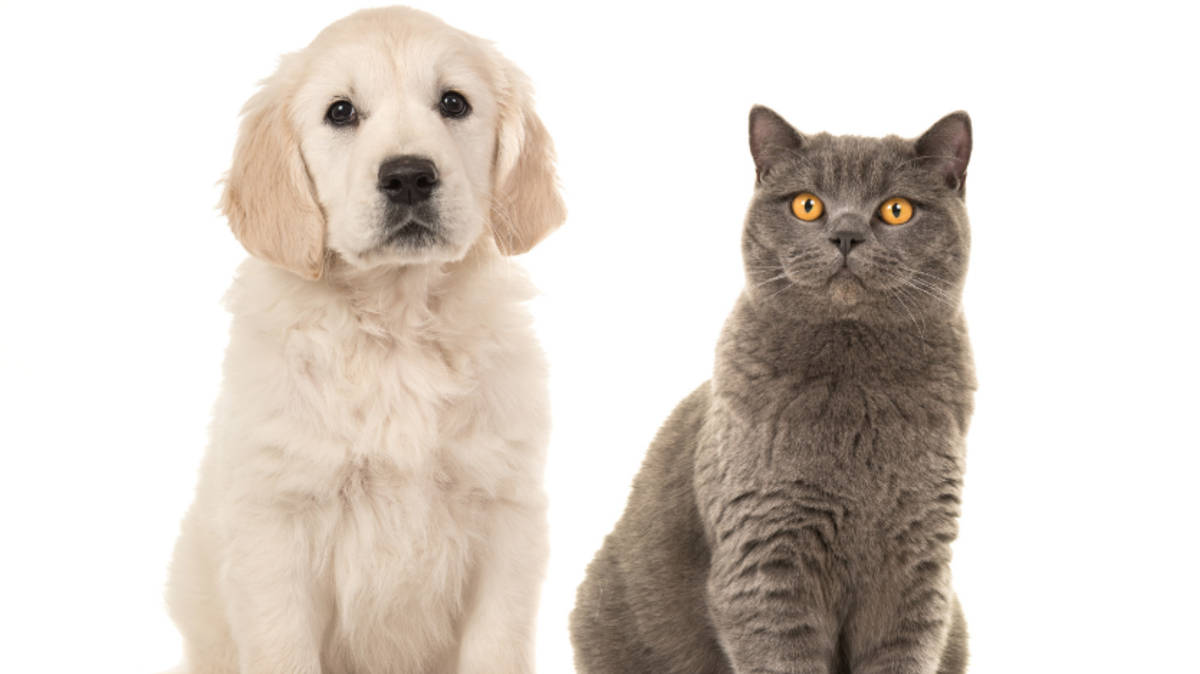 Quiz: Are you actually a cat or a dog, based on your taste in music?
