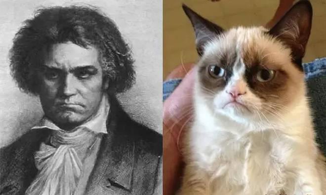 Beethoven/Grumpy Cat