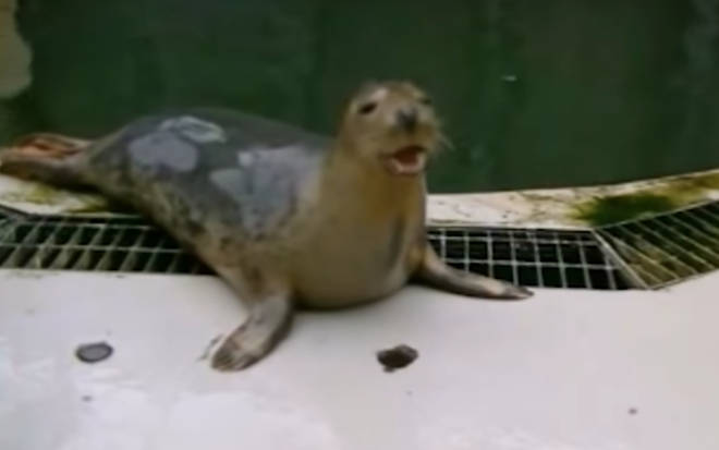 Seal taught to sing the 'Star Wars' theme