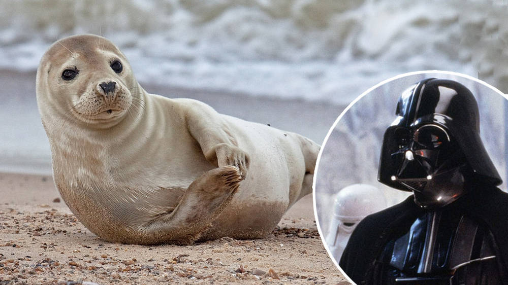 Seals trained to sing the 'Star Wars' theme – watch the video