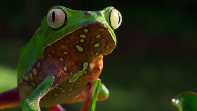 Stunning close-up from 'Our Planet' David Attenborough Netflix