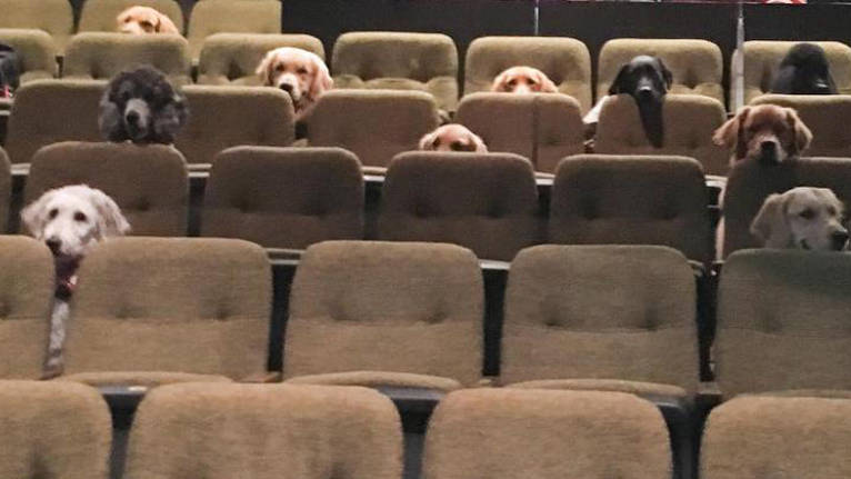 Service dogs attend a performance of 'Billy Elliot: The Musical' as part of their training