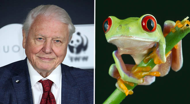 David Attenborough's Netflix documentary, Our Planet, explores the devastating effects of climate change