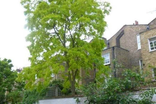A classical pianist in Notting Hill wants permission to chop down a tree