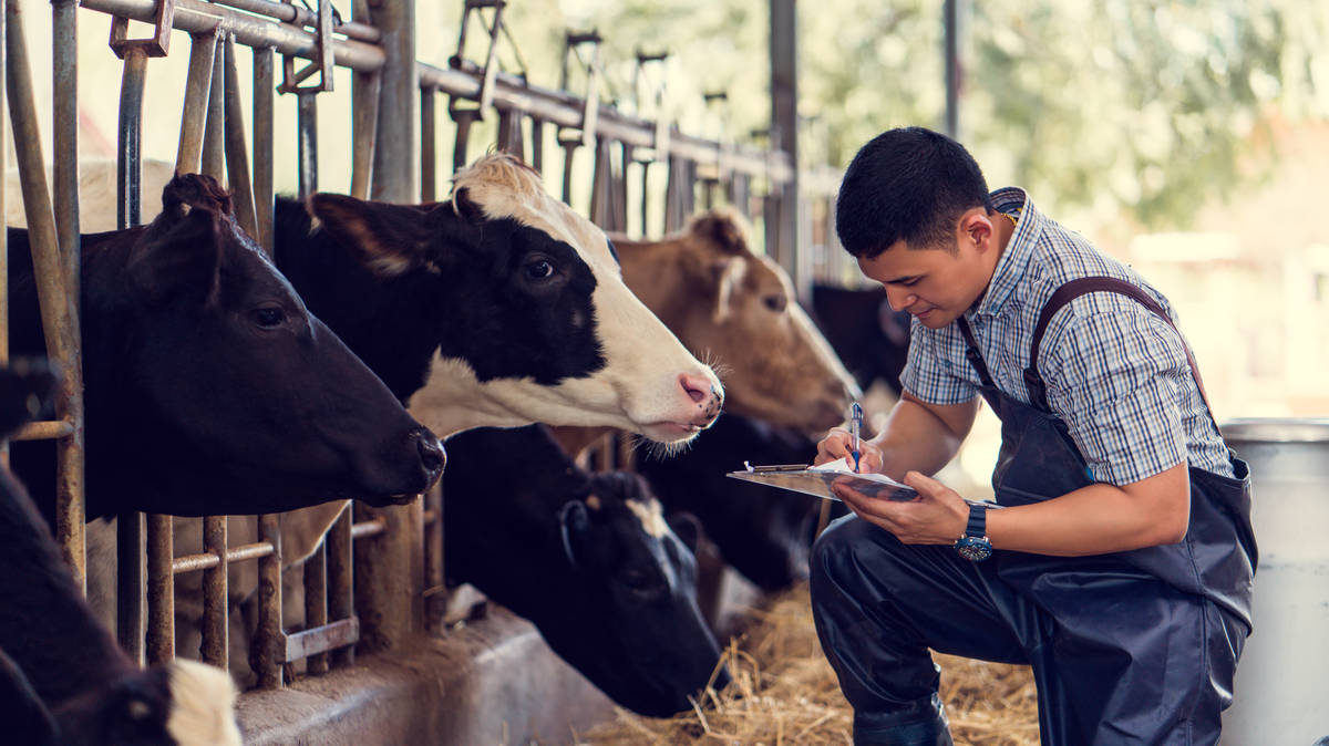 Classical music increases cows' milk yield, study finds