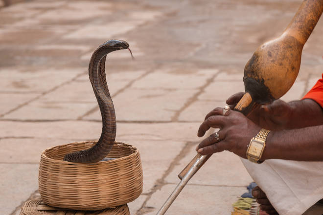 Music played on an Indian snake charmer's flute can help boost premature babies' brains