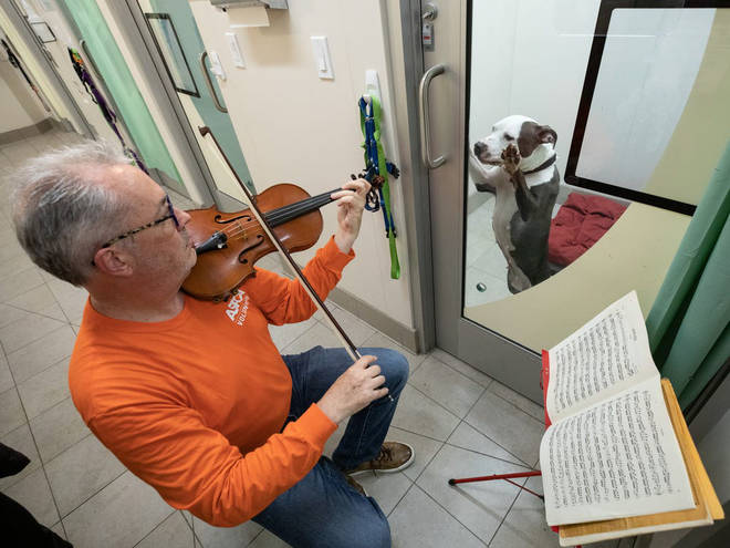 Bach for rescue dogs